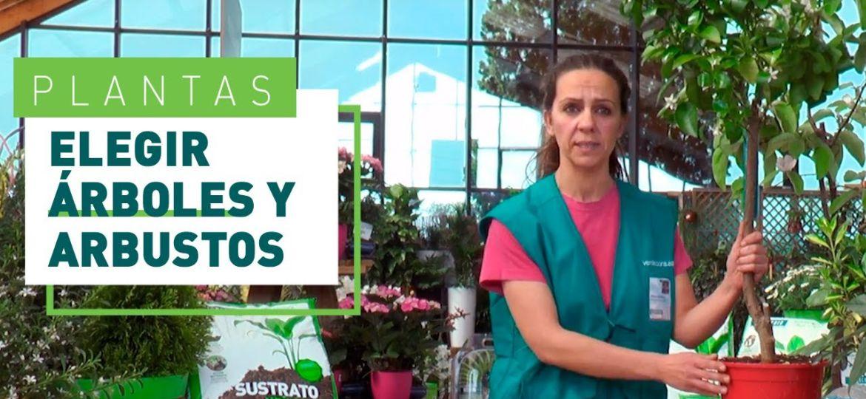 arboles-decorativos-para-jardin-tips-para-comprar-el-jardin