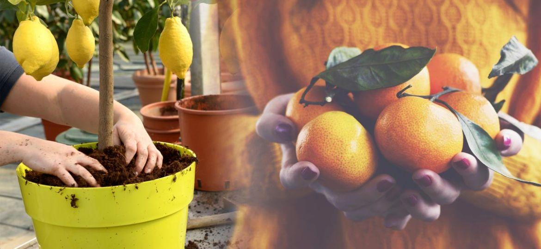 arboles-frutales-en-macetas-grandes-consejos-para-instalar-en-tu-terraza