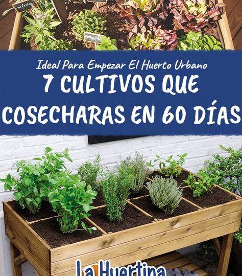 cobertizos-de-madera-para-jardin-trucos-para-decorar-tu-jardin