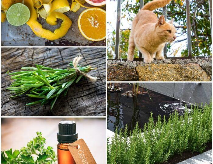 como-ahuyentar-gatos-de-mi-jardin-consejos-para-montar-el-jardin