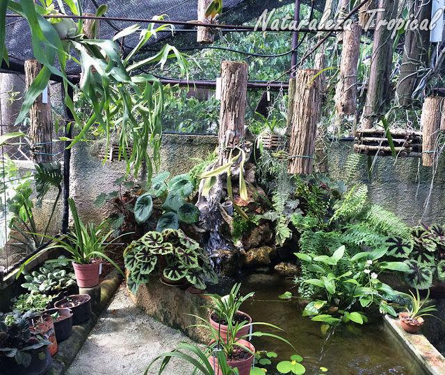 como-hacer-un-estanque-en-el-jardin-consejos-para-mantener-el-jardin