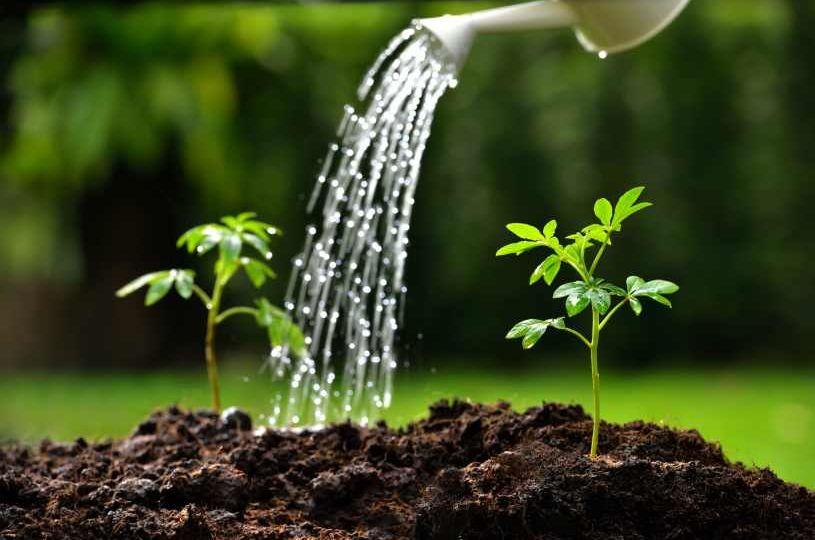 como-hacer-una-fuente-de-agua-para-jardin-trucos-para-comprar-el-jardin