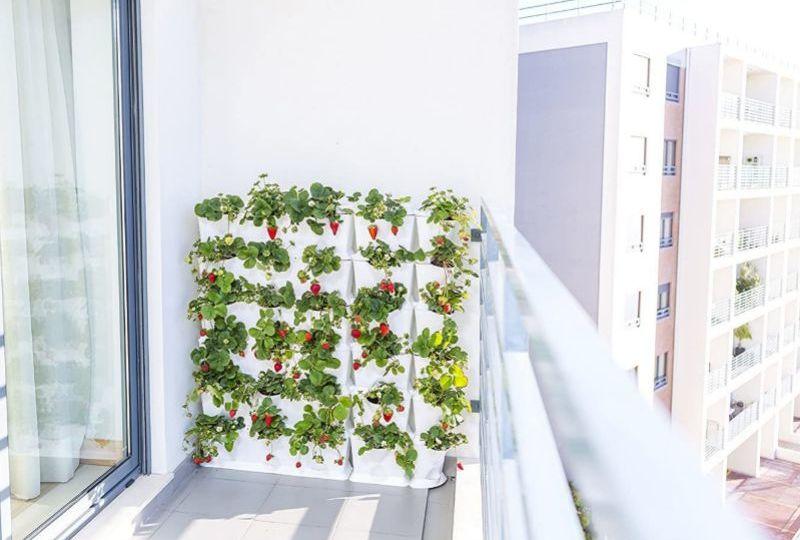 conjuntos-de-jardin-segunda-mano-trucos-para-comprar-el-jardin
