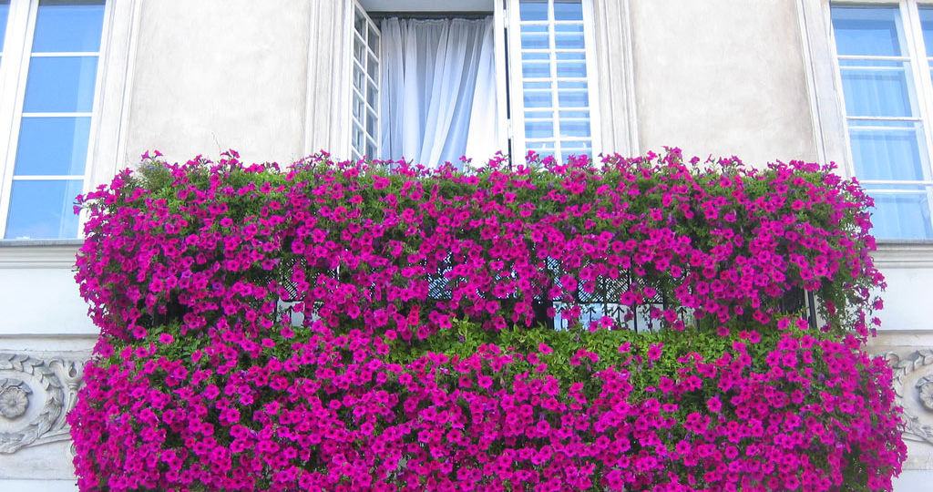 flores-para-balcones-tips-para-montar-en-tu-terraza