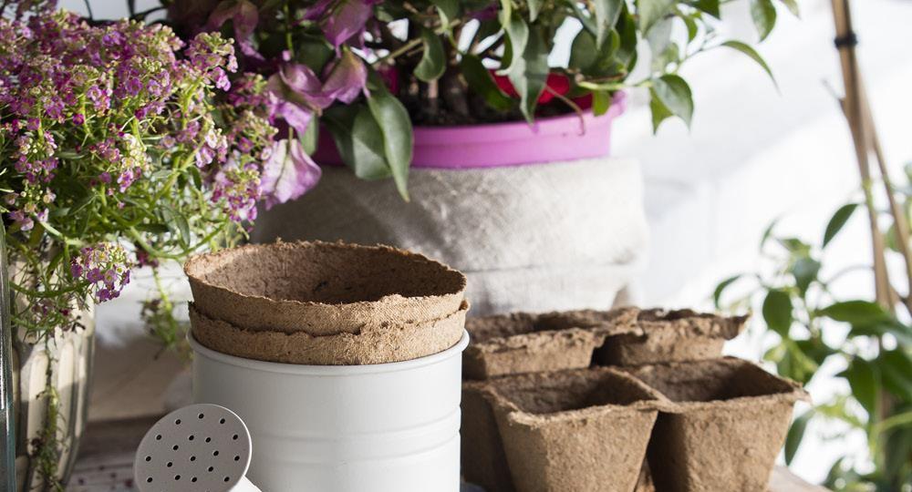 flores-para-terraza-ideas-para-comprar-en-la-terraza