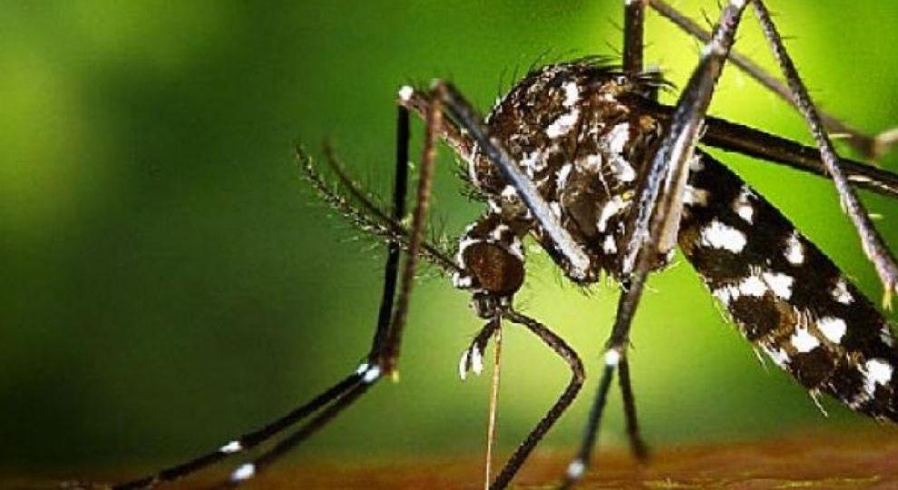 fumigar-el-jardin-contra-el-mosquito-tigre-ideas-para-comprar-tu-jardin