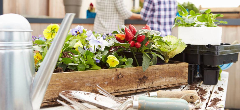 herramientas-de-jardineria-segunda-mano-tips-para-mantener-el-jardin