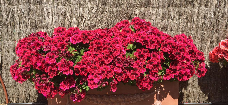 jardineras-de-plastico-grandes-consejos-para-mantener-el-jardin