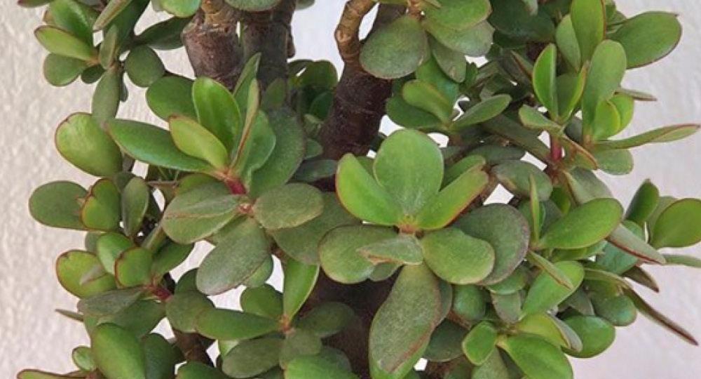plantas-de-balcon-resistentes-al-sol-consejos-para-montar-en-tu-terraza