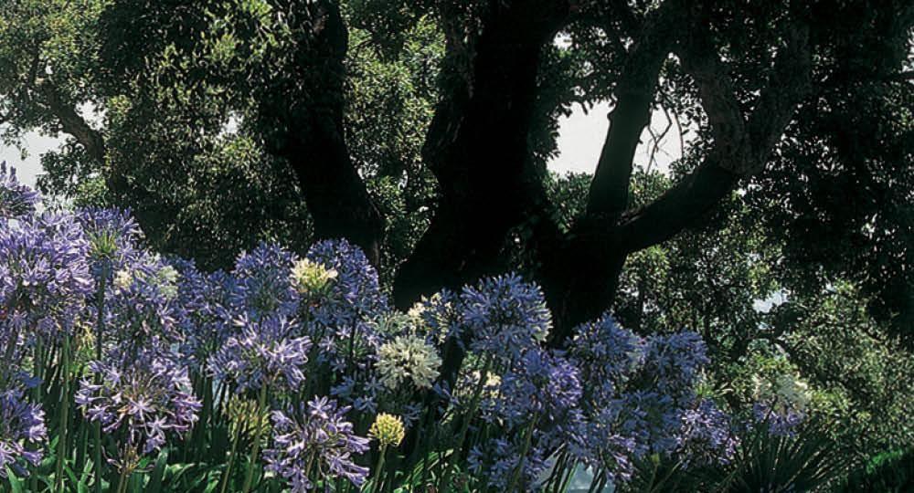 plantas-de-jardin-con-flor-consejos-para-mantener-tu-jardin