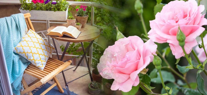 plantas-de-sol-directo-para-jardin-ideas-para-mantener-tu-jardin