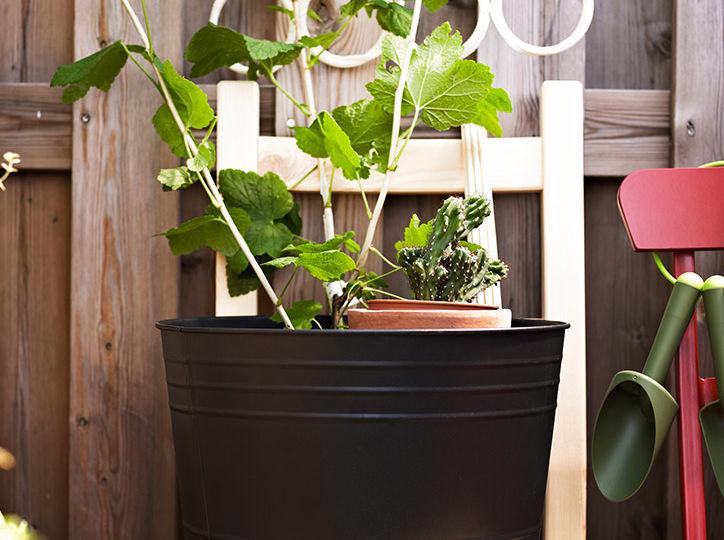 plantas-exterior-invierno-ideas-para-instalar-en-tu-terraza