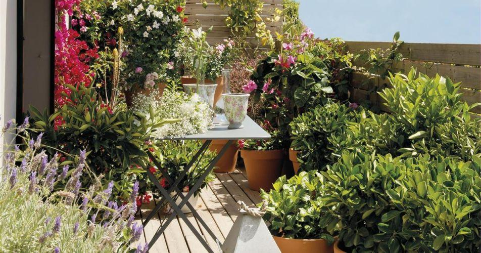 plantas-olorosas-todo-el-ano-ideas-para-montar-en-la-terraza