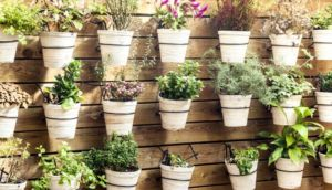 Como Decorar Un Jardin Con Piedras: Tips para montar el jardín
