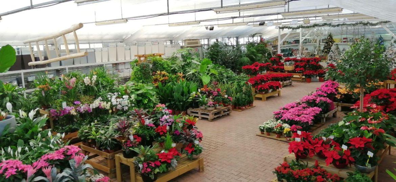 tiendas-de-jardineria-en-barcelona-trucos-para-mantener-el-jardin