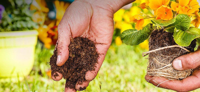 tiendas-de-jardineria-en-valencia-trucos-para-montar-el-jardin