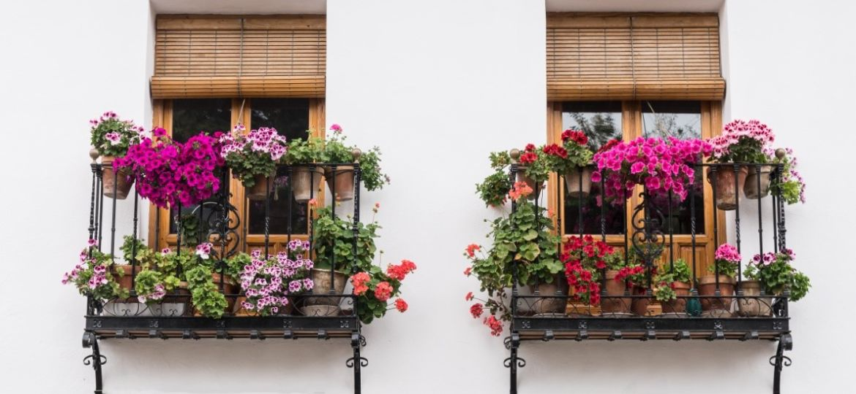 trepadoras-con-flor-consejos-para-montar-en-la-terraza